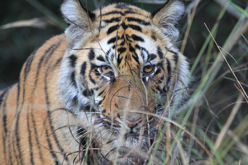 Are you looking for me?? by Jay Vedant