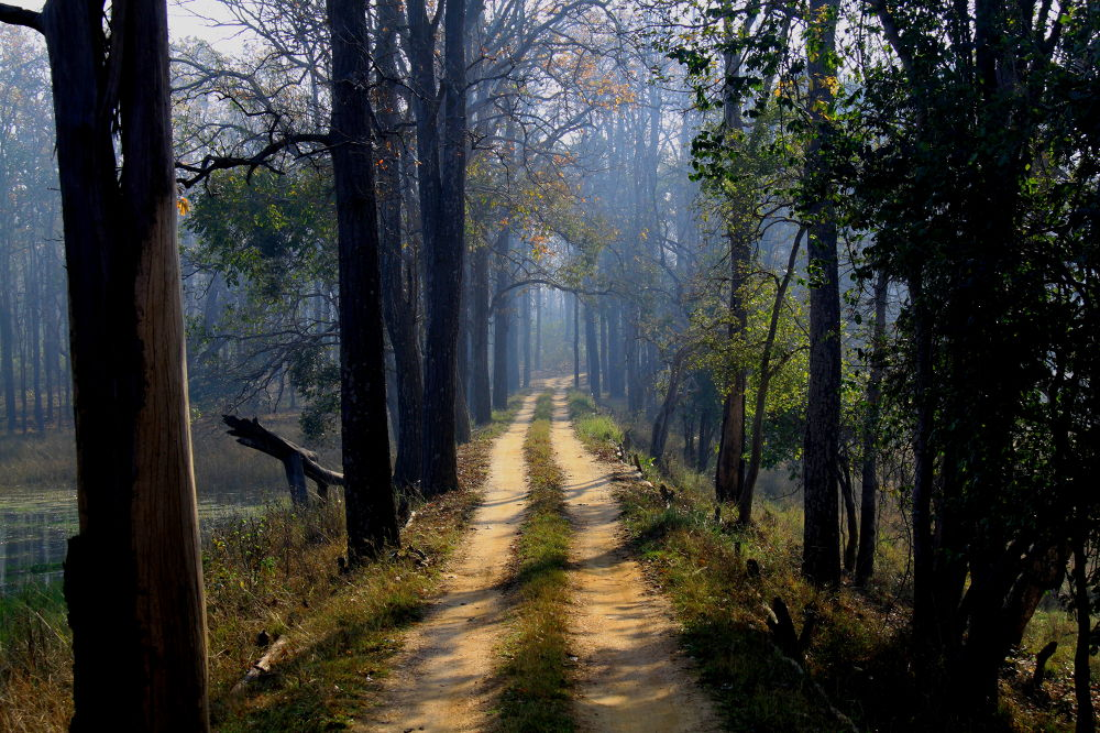 Kanha National Park  by Jay Vedant