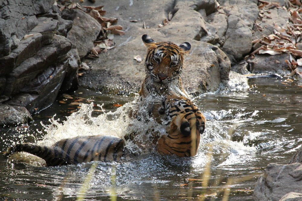 Playtime by Jay Vedant