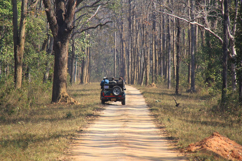 Photo in Landscape #india #wildlife #trails #jungle #forest