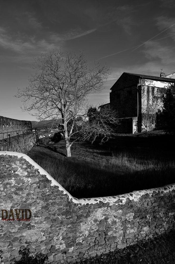 ¿the josua tree? by davidferrervaldes