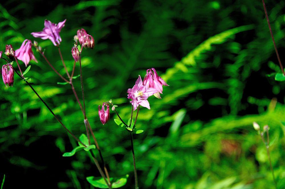 In my garden by mariocinguino