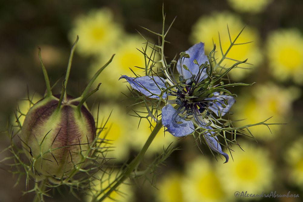 Flower by mariaalexandraabrunhosa