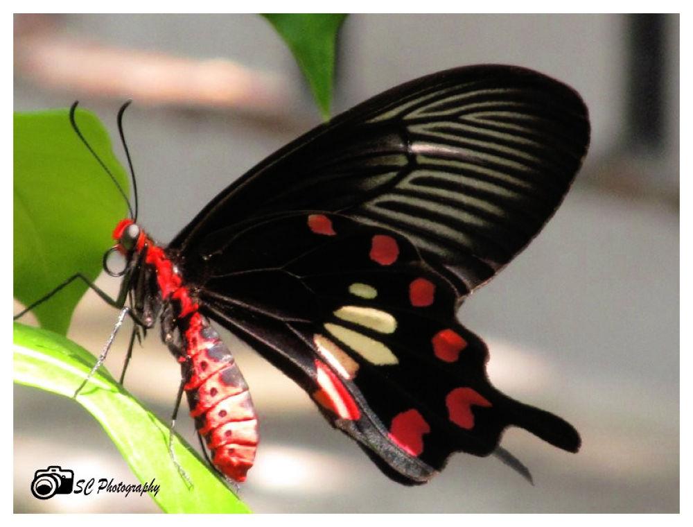 IMG_6613.jpg by Soma Chakraborty Sengupta