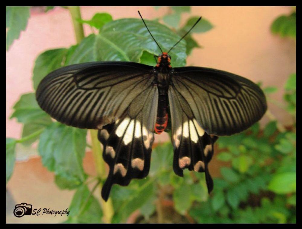 IMG_6617_001.jpg by Soma Chakraborty Sengupta