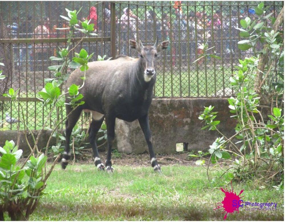 385187_149881731832220_106825278_n.jpg by Soma Chakraborty Sengupta