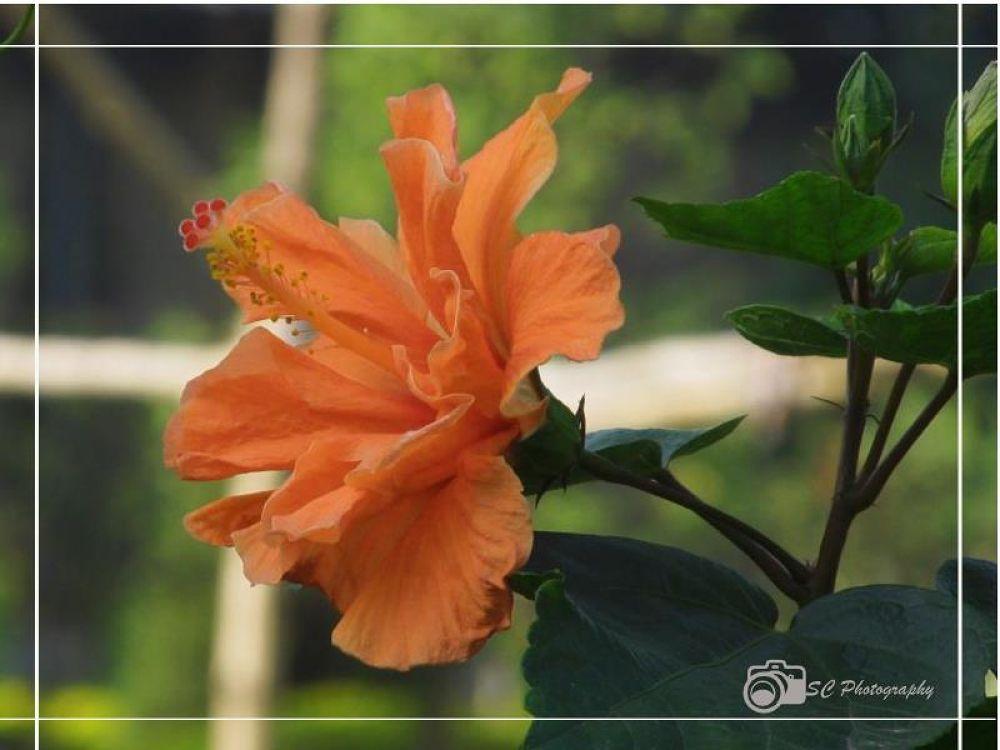 934784_188653157955077_1156194307_n.jpg by Soma Chakraborty Sengupta