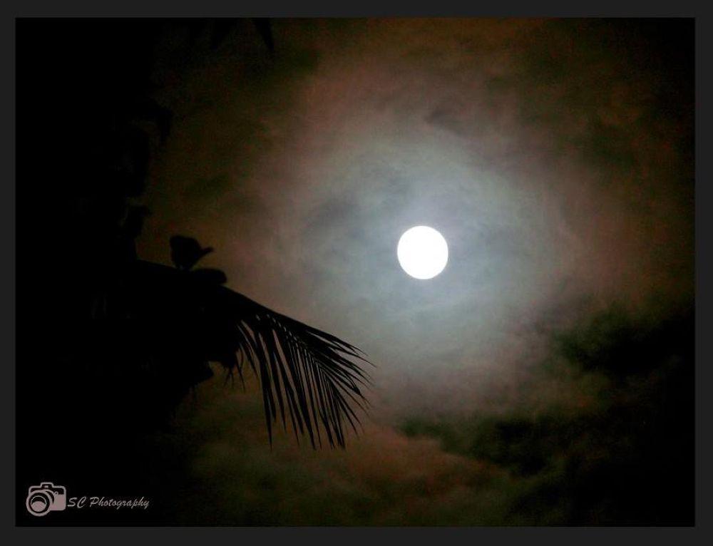 1013461_207679762719083_955020622_n (1).jpg by Soma Chakraborty Sengupta