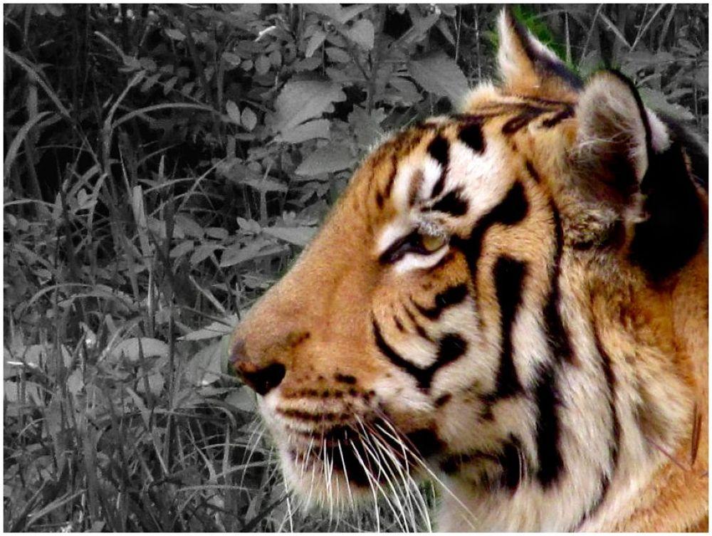 IMG_4279 copy by Soma Chakraborty Sengupta