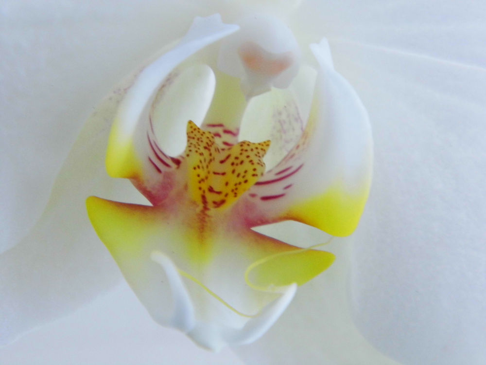 Orchid inside by Ann