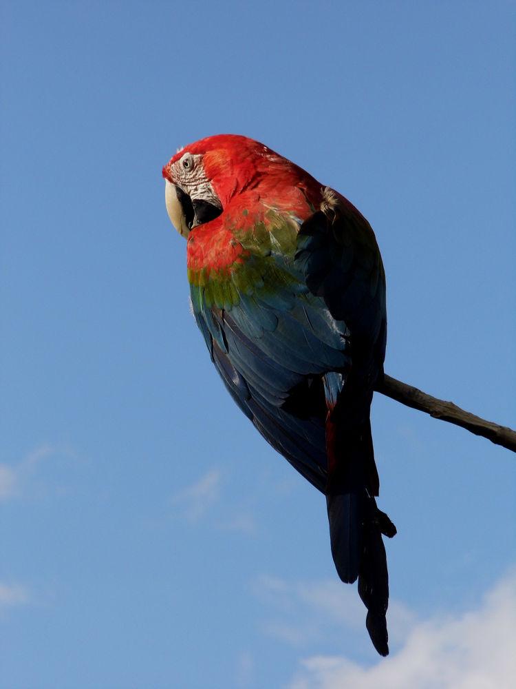 Parrot II by Ann