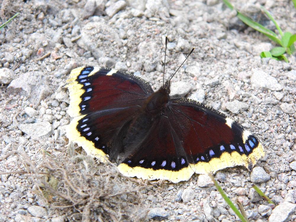 Butterfly by Ann