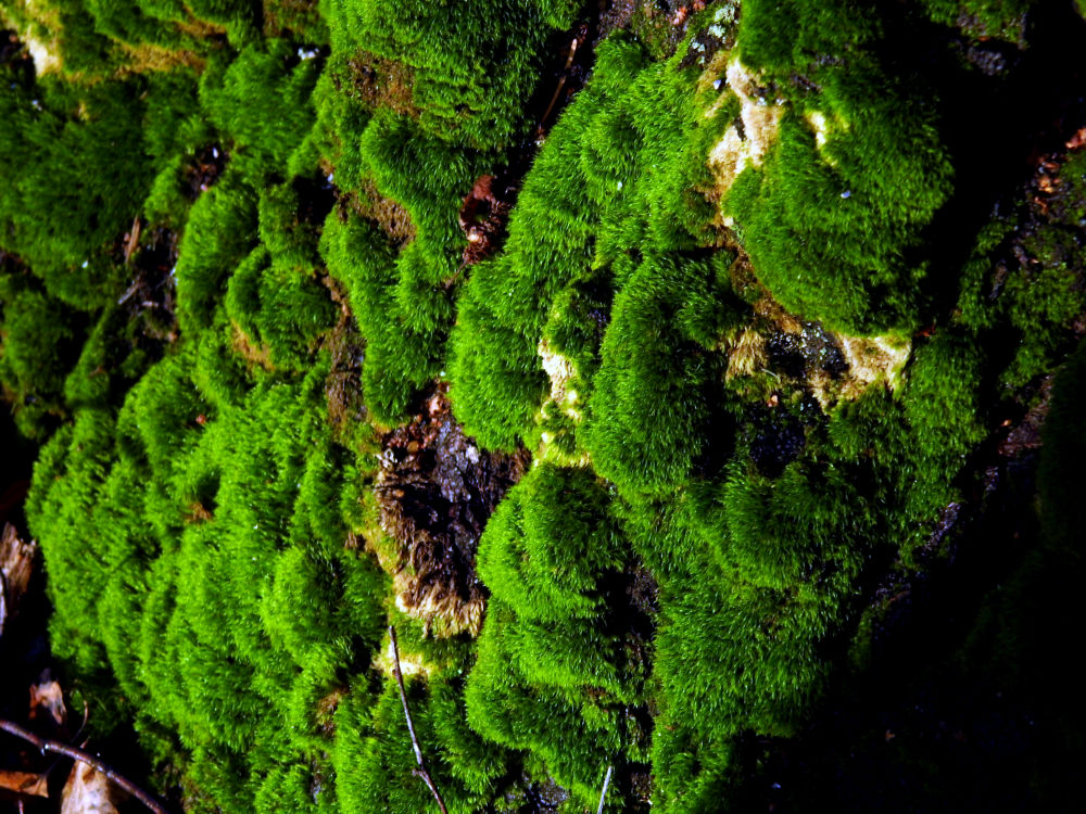 Nice soft moss over the tree by Ann