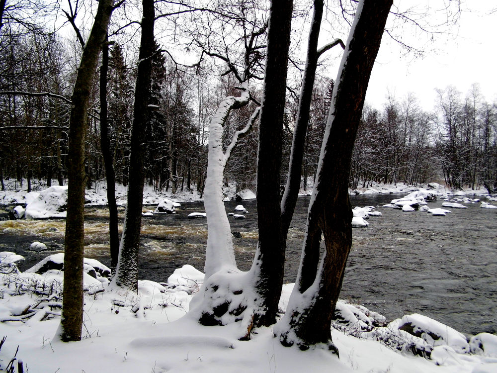 Trees near the rapids by AnnSoul