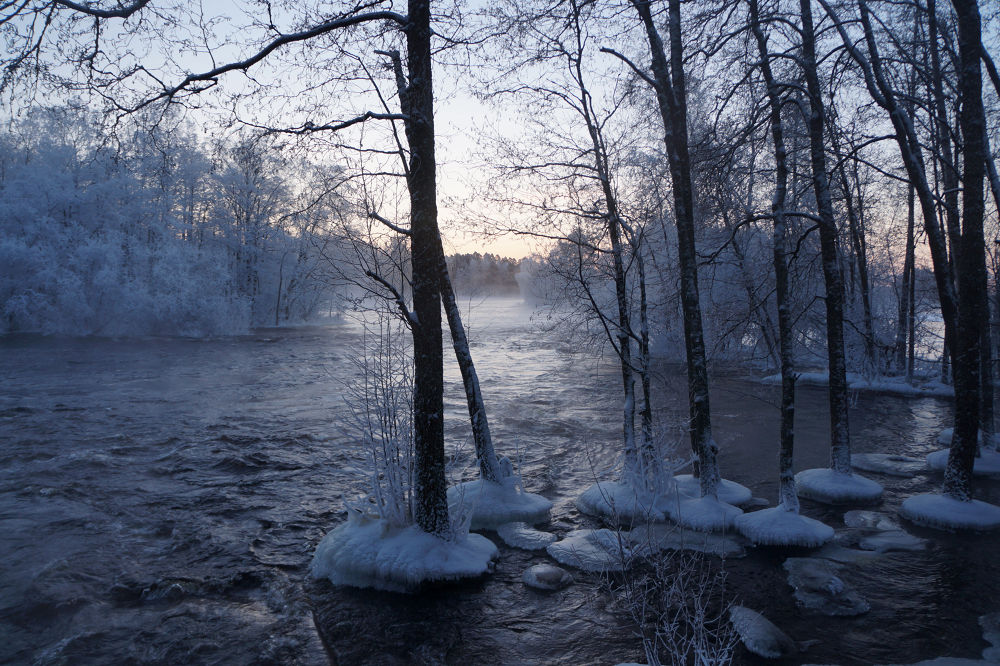 Water encircle the trees by Ann