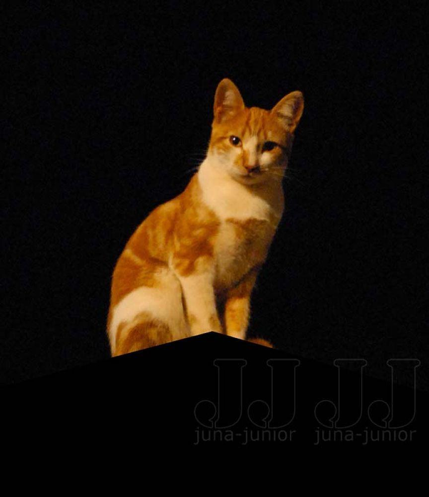 foto de juna-junior by juna fard