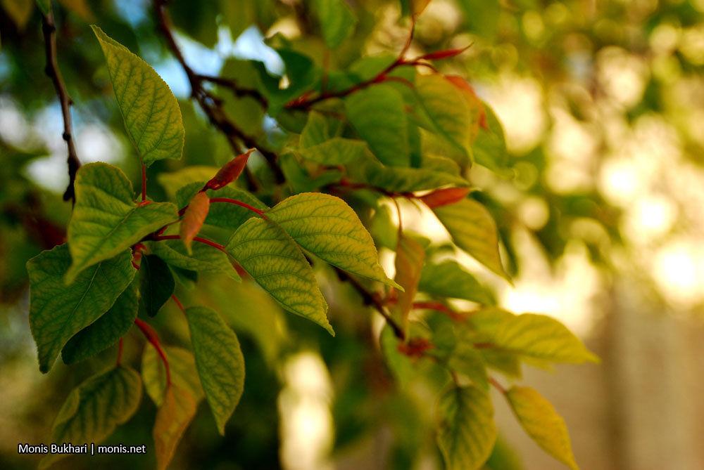 10-03-19-16-03_01.jpg by monis