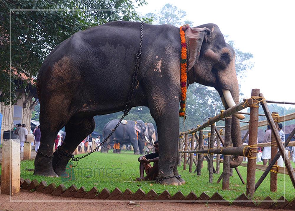 Aanayoottu  by sujithvarambil