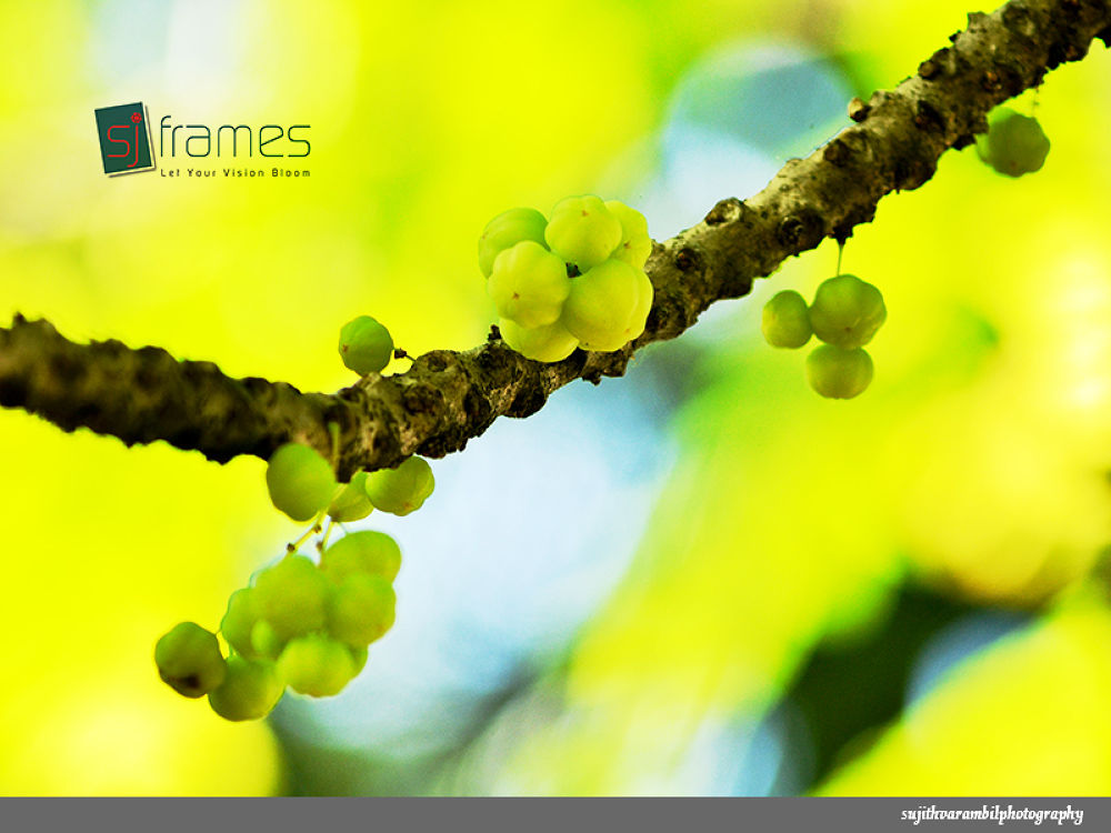 Gooseberry by sujithvarambil