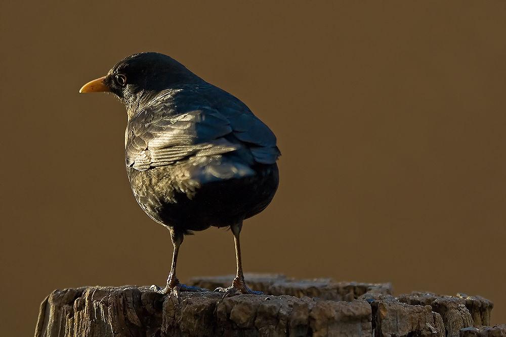 Photo in Nature #bird #sun #sunbathing #nature #andreas napravnik