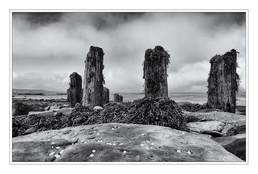 Photo in Nature #bay of fundy #canada #nature #landscape #black and white #andreas napravnik