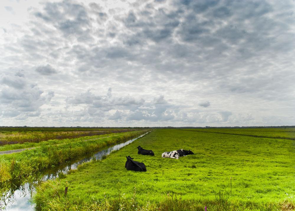 Hollands landschap by raimonddehoogt