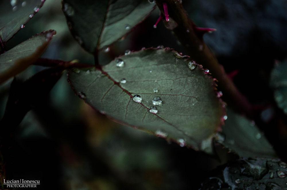rain drops by lucian31