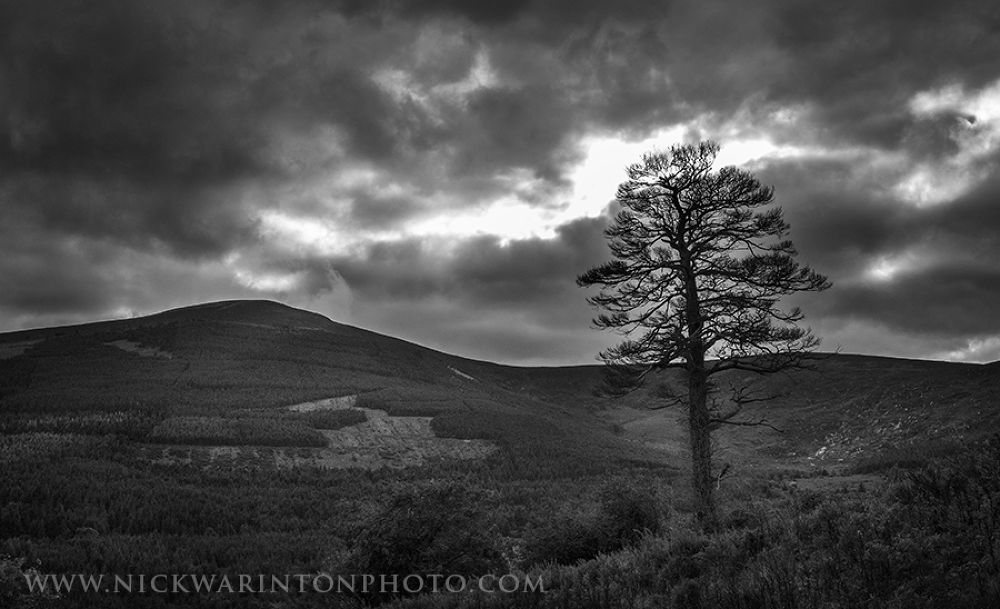 Solitary Tree by nswar