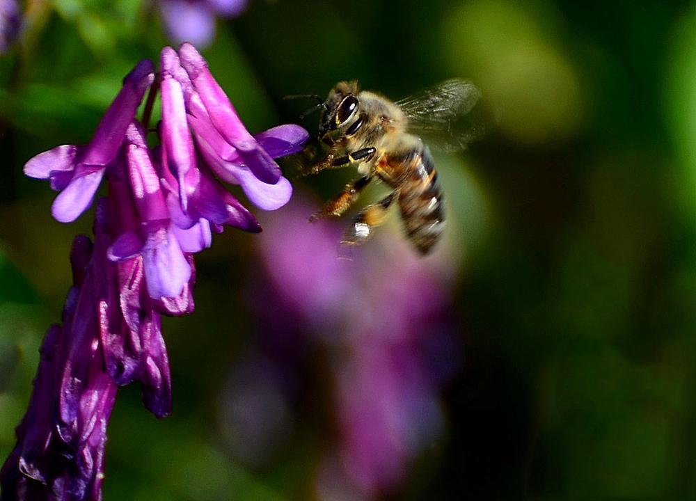 Bee by Filiz Bariskan