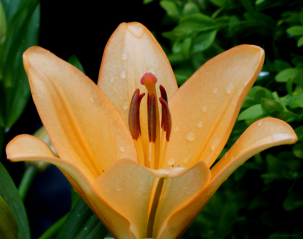FlowerLove by Man Jove