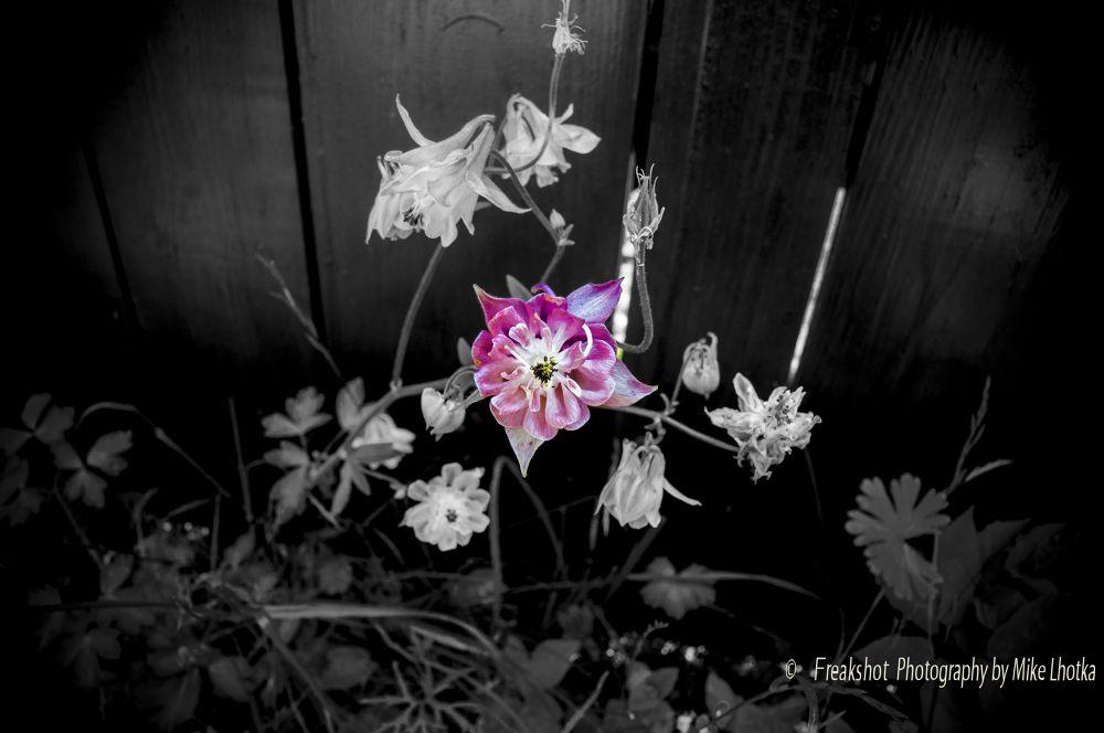 DSC_0103.jpg by FreakshotPhotography