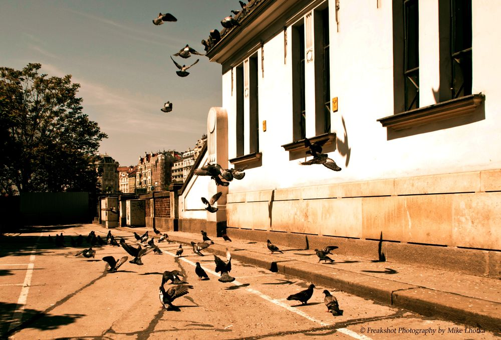 Doves on the street by FreakshotPhotography