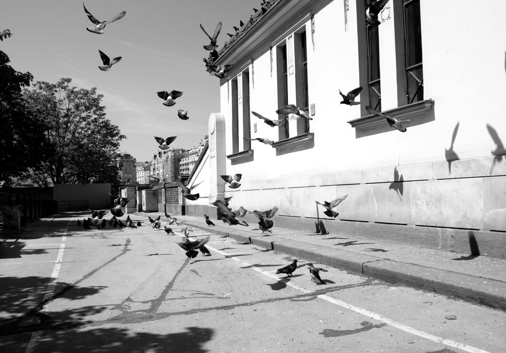 Flying Pigeons by FreakshotPhotography