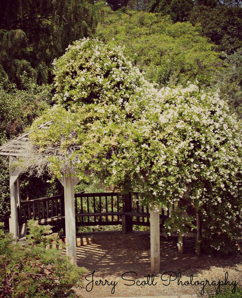 Botanic Gardens  by JerryScott