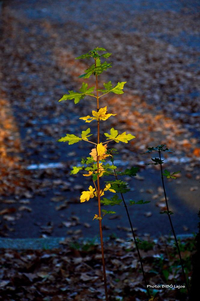 Fall 1 by lajosbibo