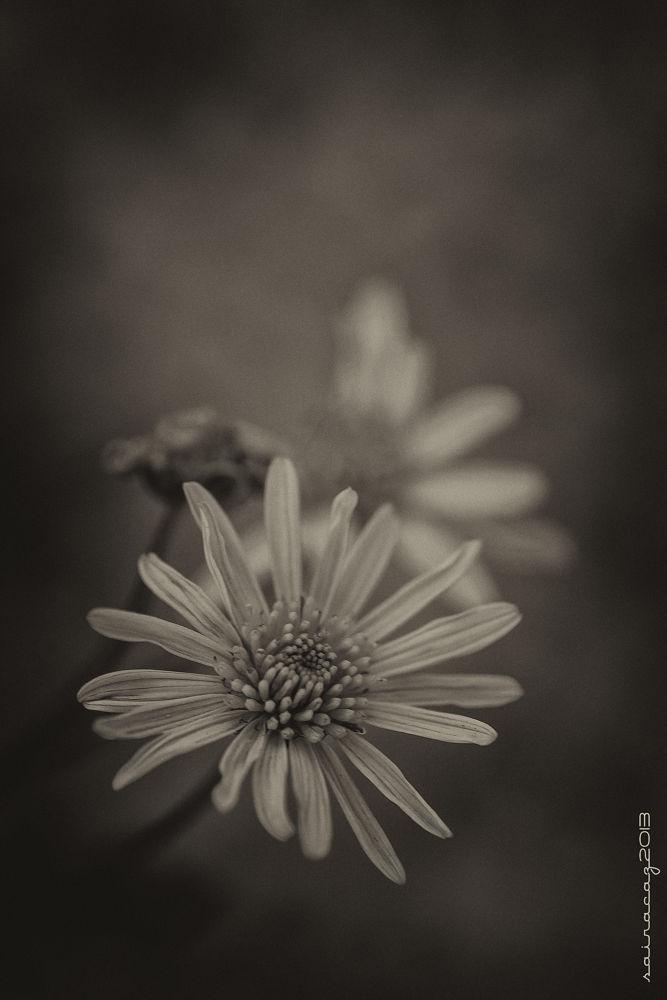 _MG_1682 bn by ZacariasAbad