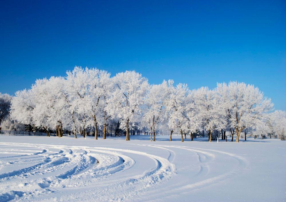 Winter Frost by rndmtn