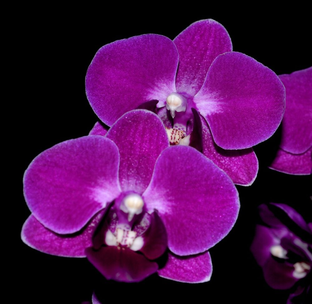 Orchids by Rndmtn 🇨🇦
