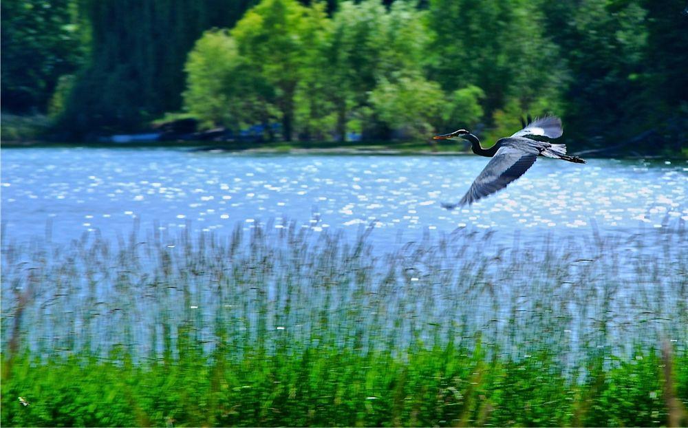 A Crane by rndmtn