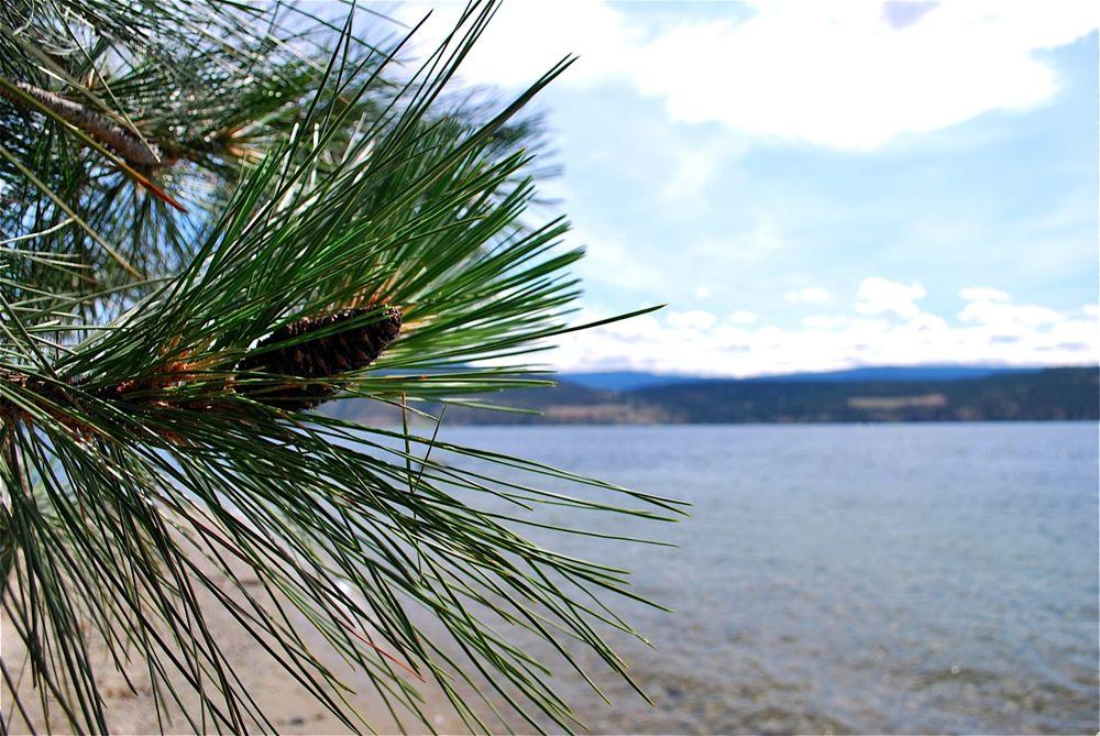 Pine by the Lake by rndmtn