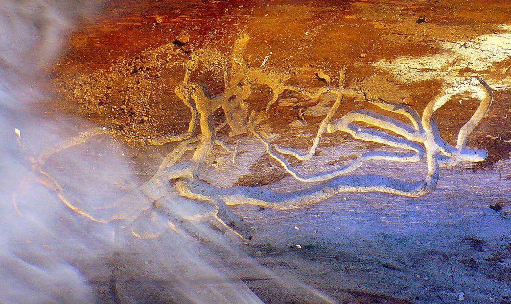 Burning Nature's Art - P1120541 by bellamahri