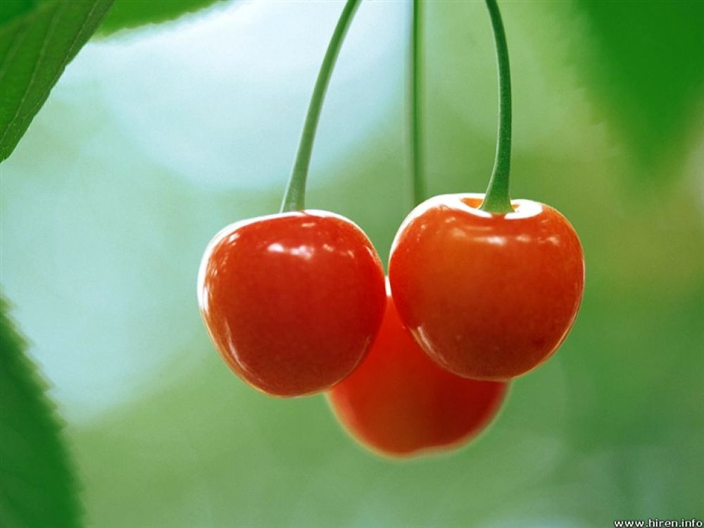 red-cherries-3c by hardeepsingh