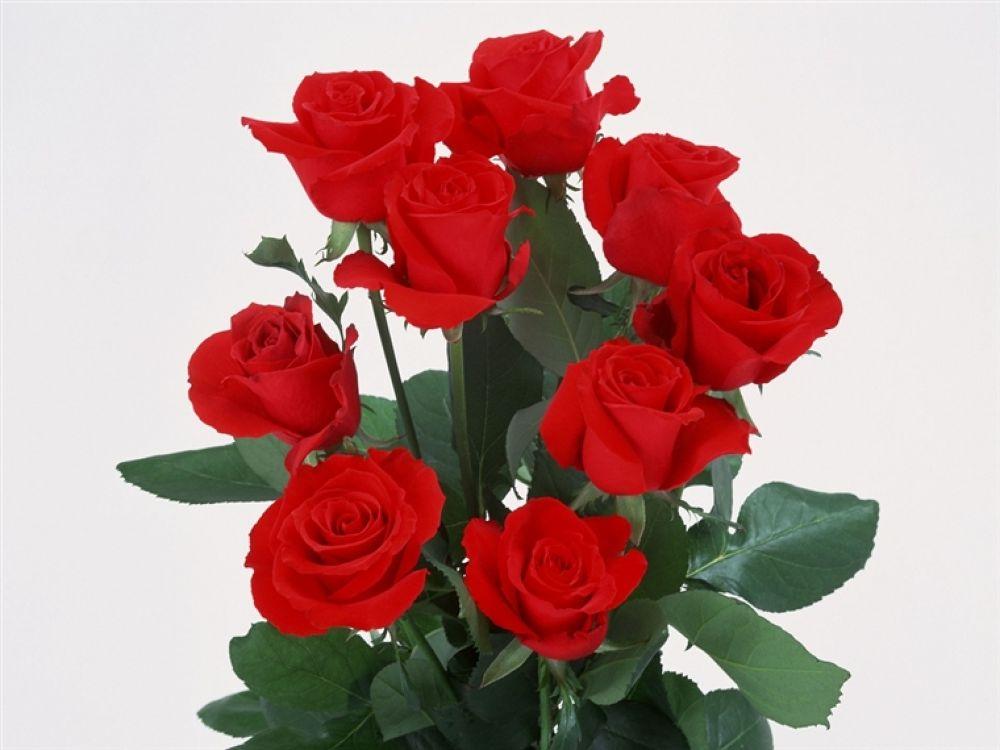 roses-bunch by hardeepsingh