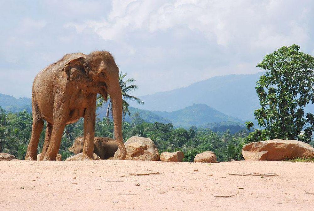 Elephant orphange  by mdashaduz