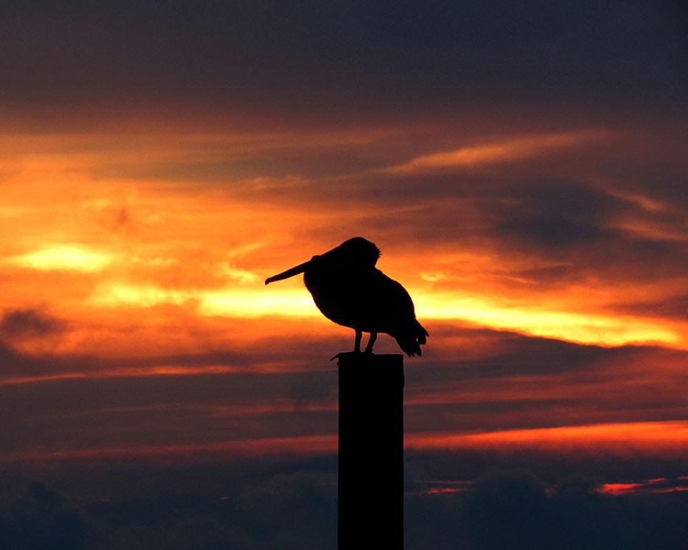 pelican against a dramatic sky by Brian Hammersley