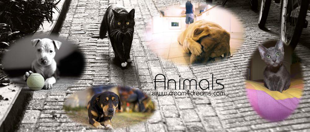 animals c4d web by C4Dmodels