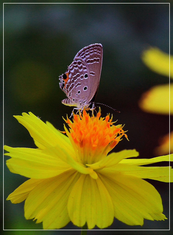 IMG_4050 by haile5895