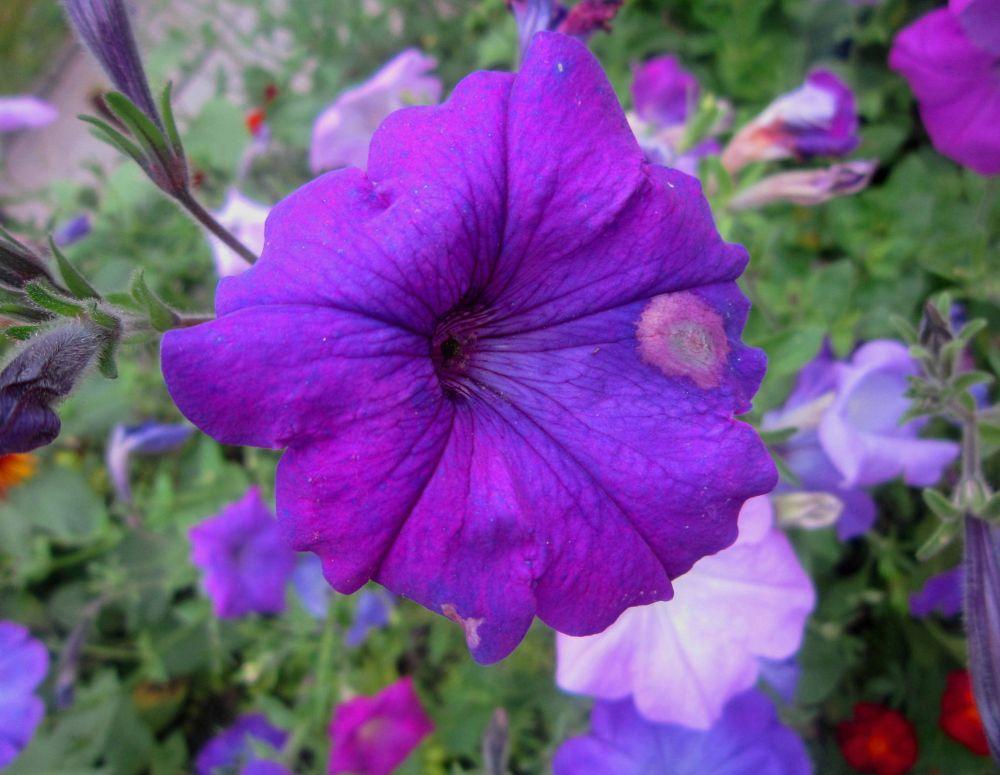 Purple Flower by Simona Bakševičiūtė
