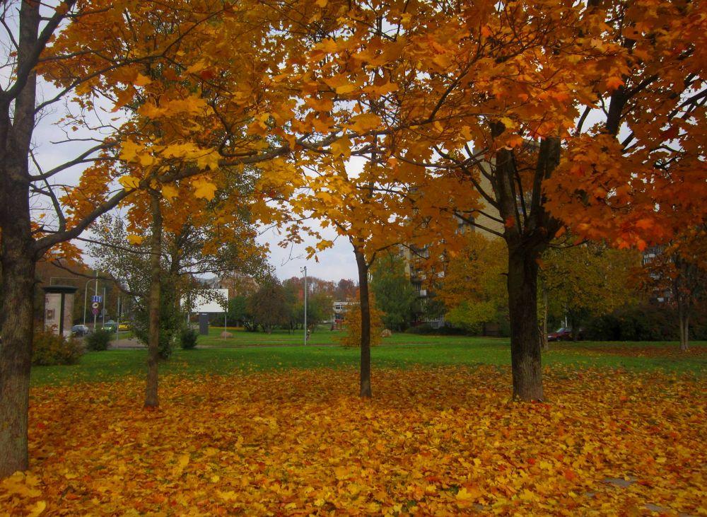Photo in Random #autumn #beauty #amazing #city #fall