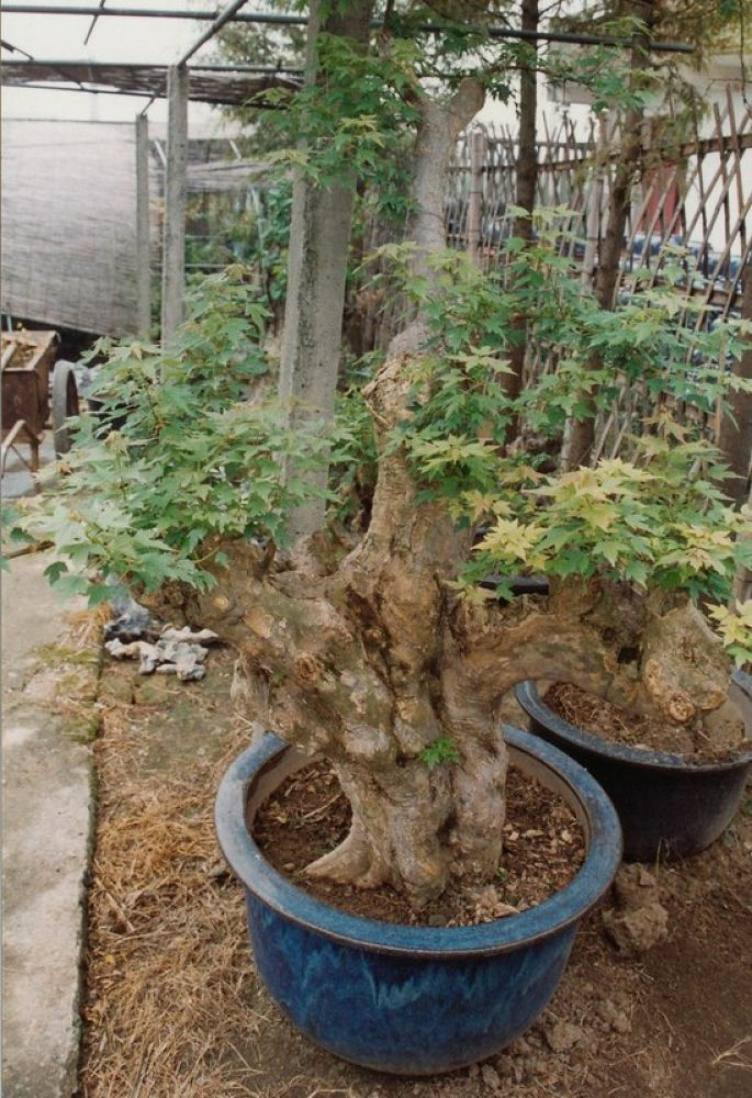 China_Zhejiang_Hangzhou_Bonsai_Garden_1993-111 by Arie Boevé